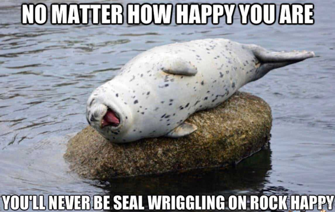 Seal Happily Scratching Its Back On A Rock