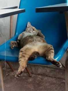 Cutest Animal Pictures - cat