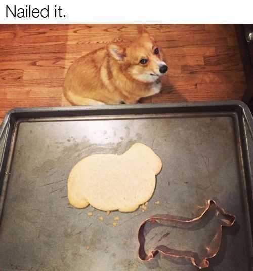 Animal Cookie Says It All