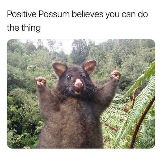 Possum Giving A You Can Do It Expression