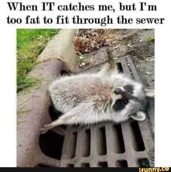 Racoon Giving Up On Life Because He's Too Fat To Fit Down Sewer