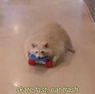 Funny Albino Racoon On Skateboard