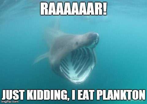 Whale Shark Doing A Fake Roar