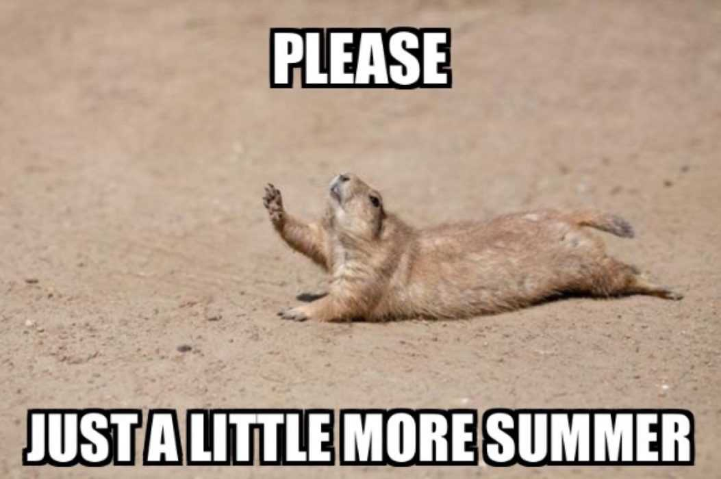 Funny Labor Day Memes groundhog