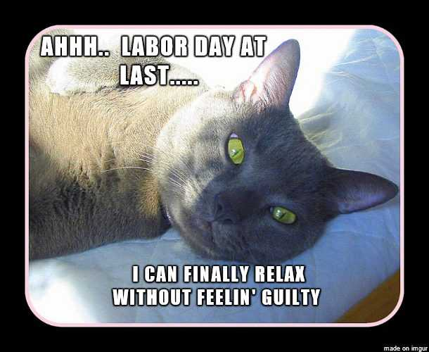 Funny Labor Day Memes cat relax without feeling guilty