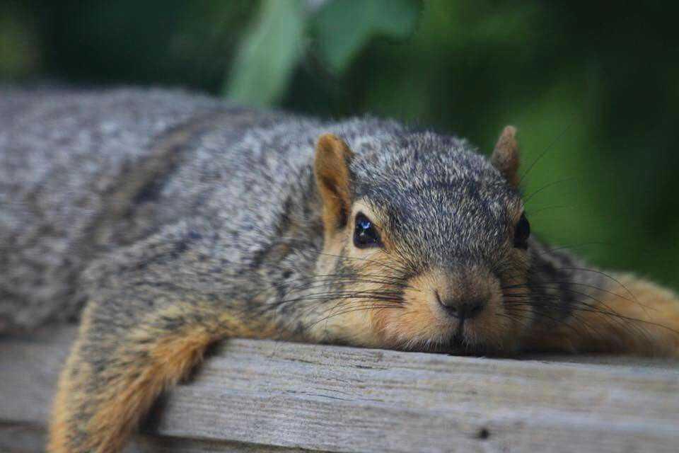 Cutest Animal Pictures - chipmunk