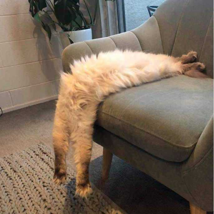 animal picture fails - all legs