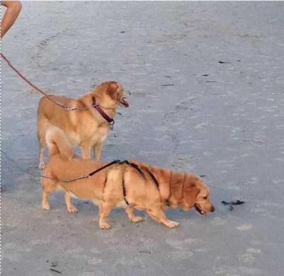 animal picture fails - 6 legged dog