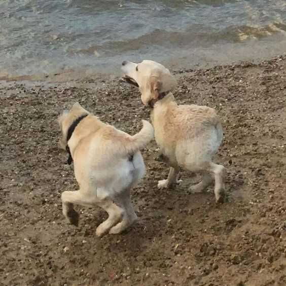 animal picture fail - 2 part dog