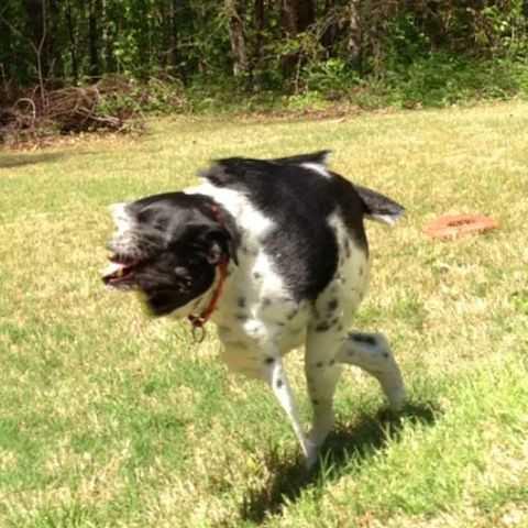 animal picture fail - 3 legged faceless dog
