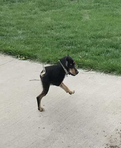 animal picture fail - another two legged dog