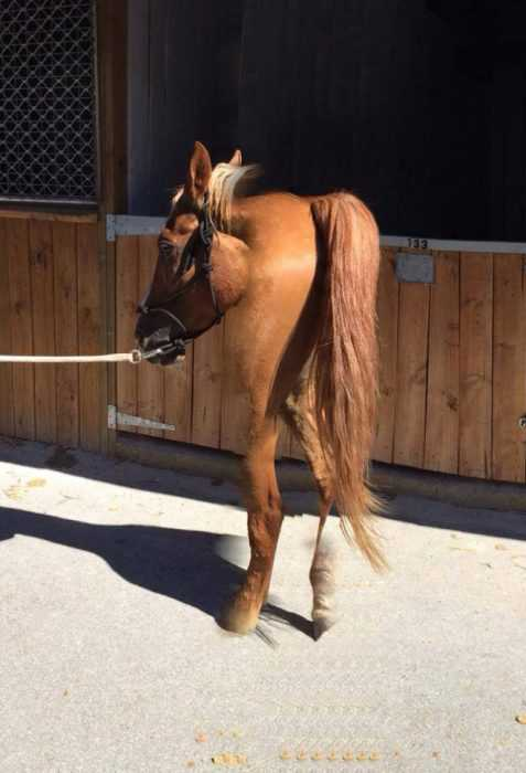 animal picture fail - another 2 legged horse