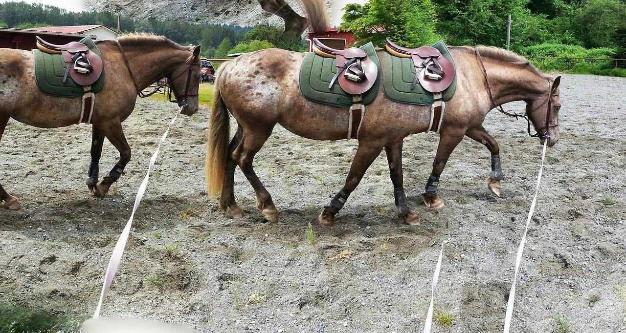 animal picture fail - 6 legged horse