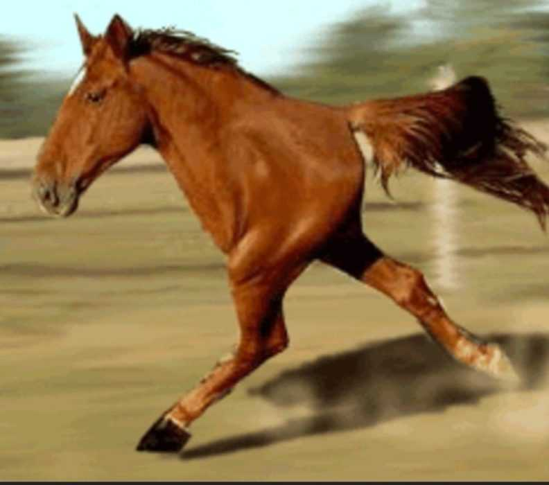 animal picture fail - 2 legged horse