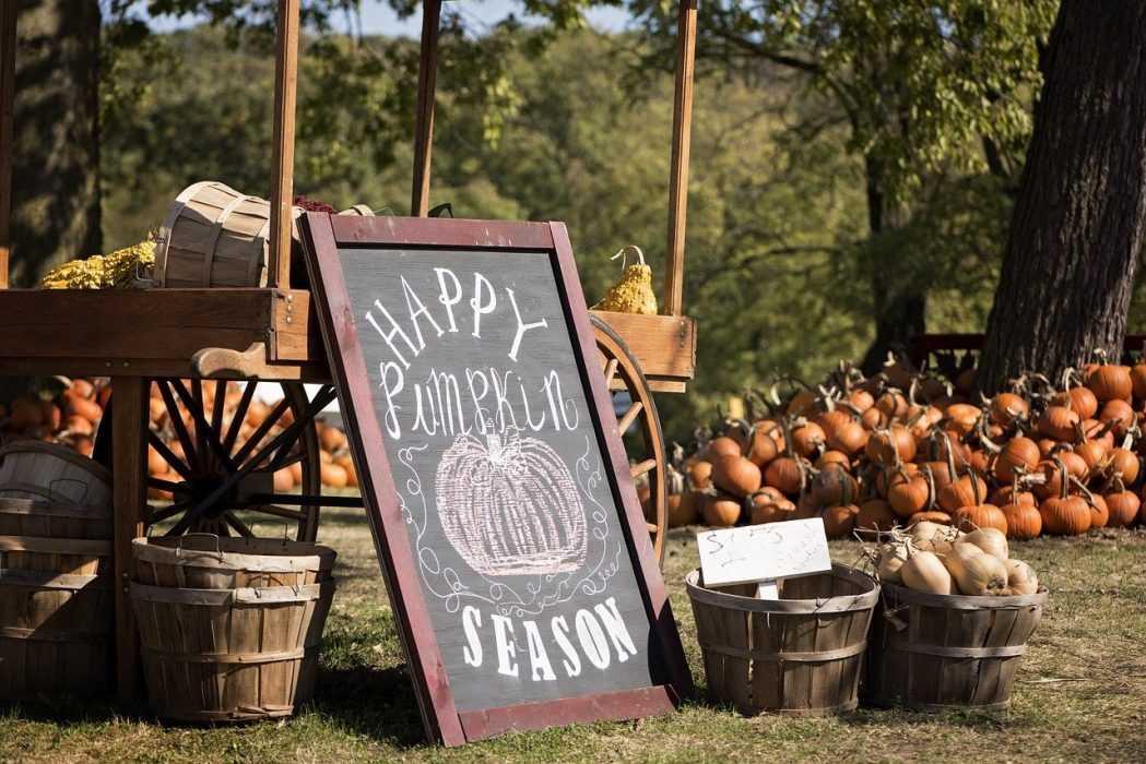 fall activities for kids - visit pumpkin patch