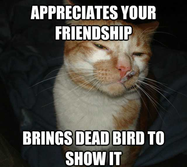 Funny Animal Memes - cat with attitude