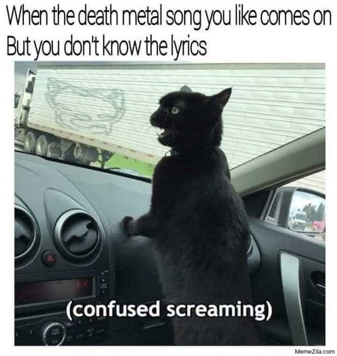 Funny Animal Memes - cat seeing logo on truck meme
