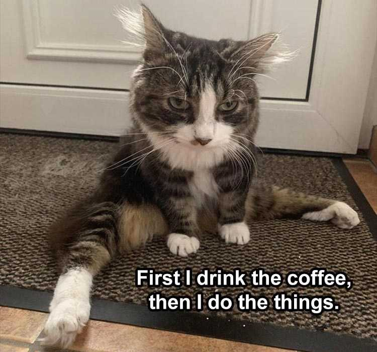 Funny Animal Memes but first coffee cat style