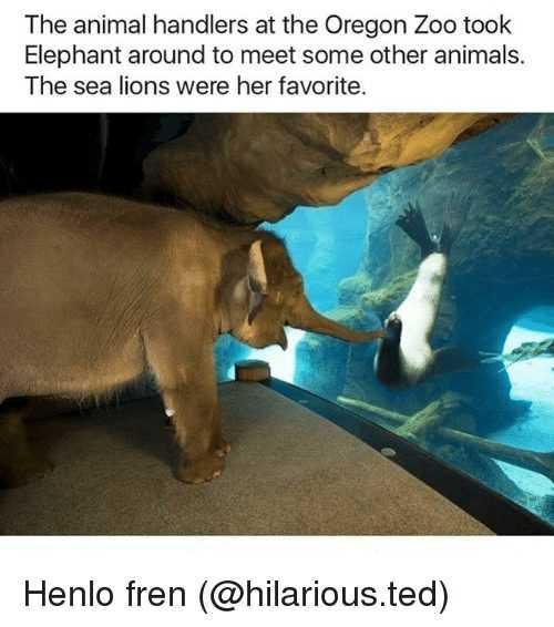 Funny Animal Memes - elephant meets see lion