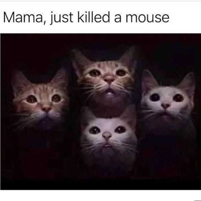 Funny Animal Memes - mouse for lunch
