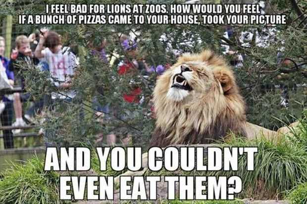 Funny Animal Memes putting yourself in a lions shoes meme