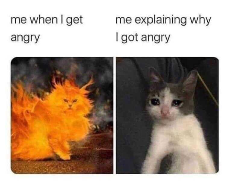 Funny Animal Memes - animal's human expressions