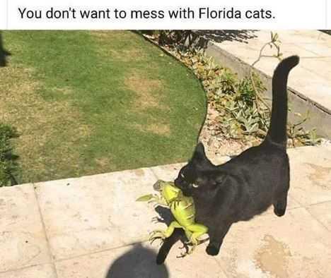 Funny Animal Memes lizard prey