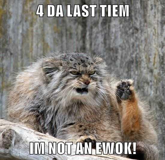 Funny Animal Memes Ewok mountain lion