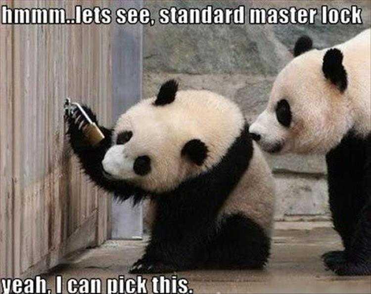 Funny Animal Memes - lock picking panda