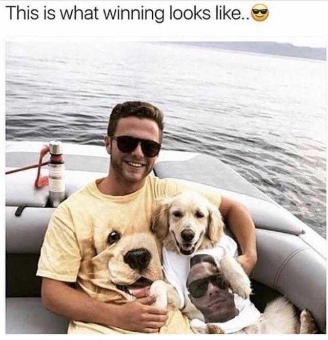 Funny Animal Memes - partner puppy look
