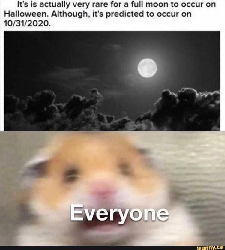 halloween memes 3 - everyone