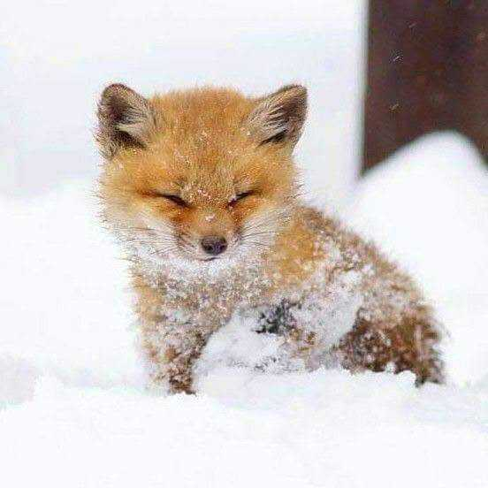 cutest baby animal picture - baby fox