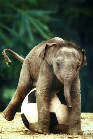 cutest baby animal pictures - baby elephant