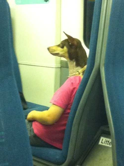 funny pictures double take photo - dog with arms and legs
