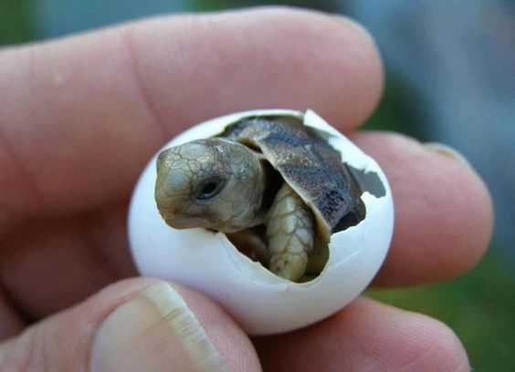 cute baby animal pictures - baby turtle