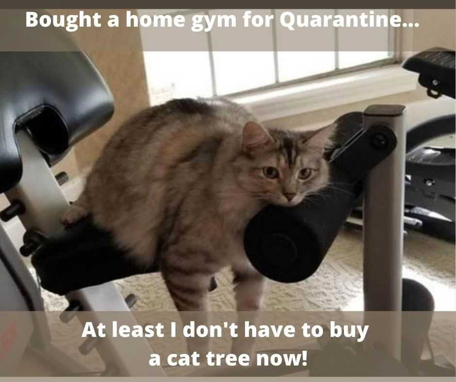 cute funny animals 8 - no need for cat tree