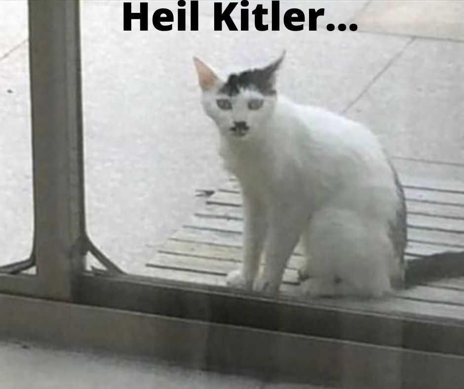 cute funny animals 5 - heil kitler