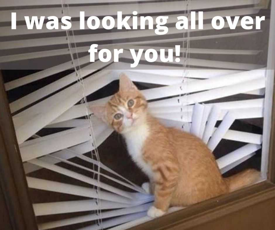 cute funny animals 1 - cat looking