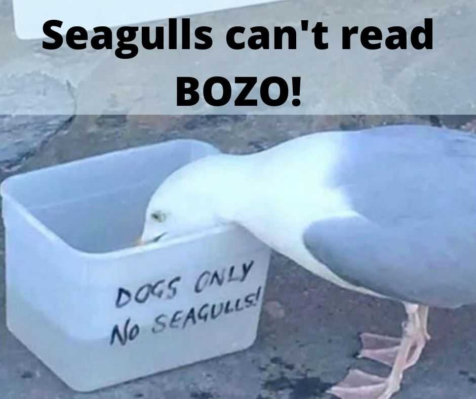 cute funny animals 10 - seagulls cannot read