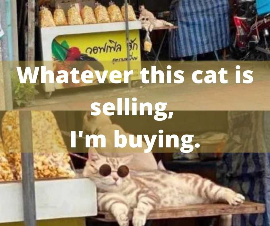 cute funny animals 12 - whatever this cat is selling i am buying