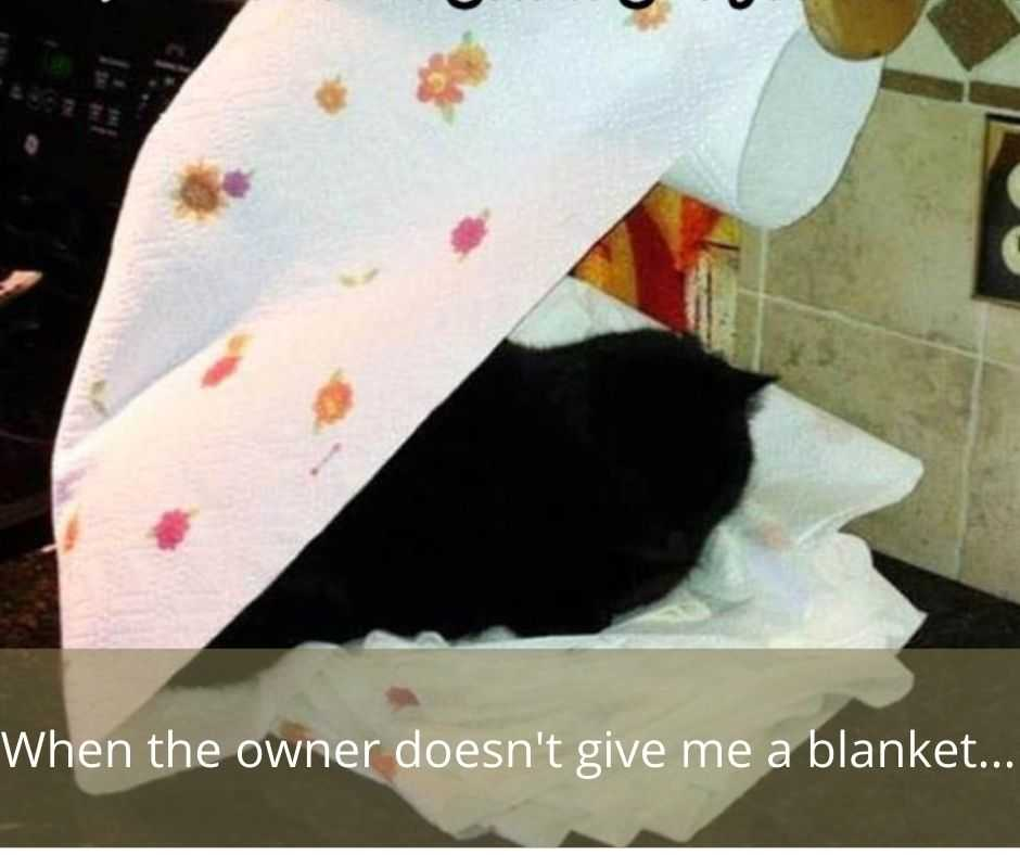 cute funny animals 6 - owner didn't give blanket