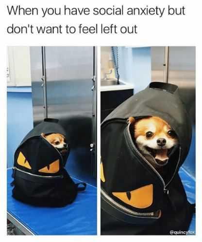 Animal Anxiety Meme - Peekaboo