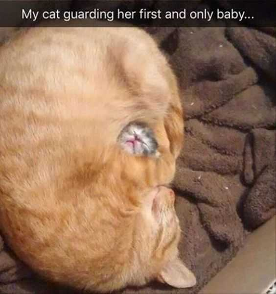 cutest baby animals picture - baby kitten