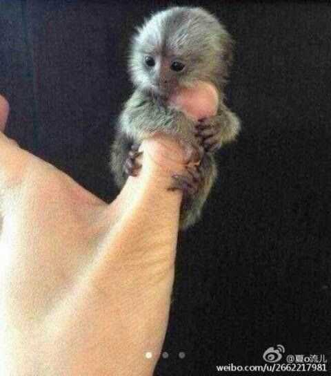 cute baby animal pictures - baby monkey