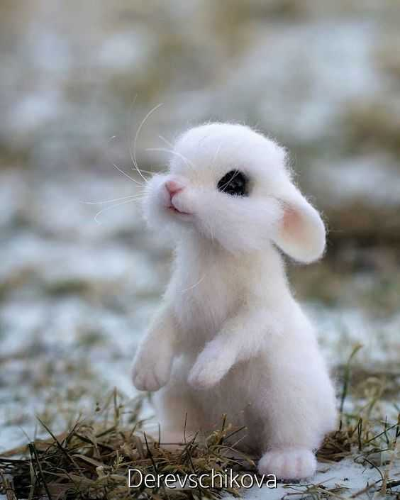 cute baby rabbit pictures - baby bunny