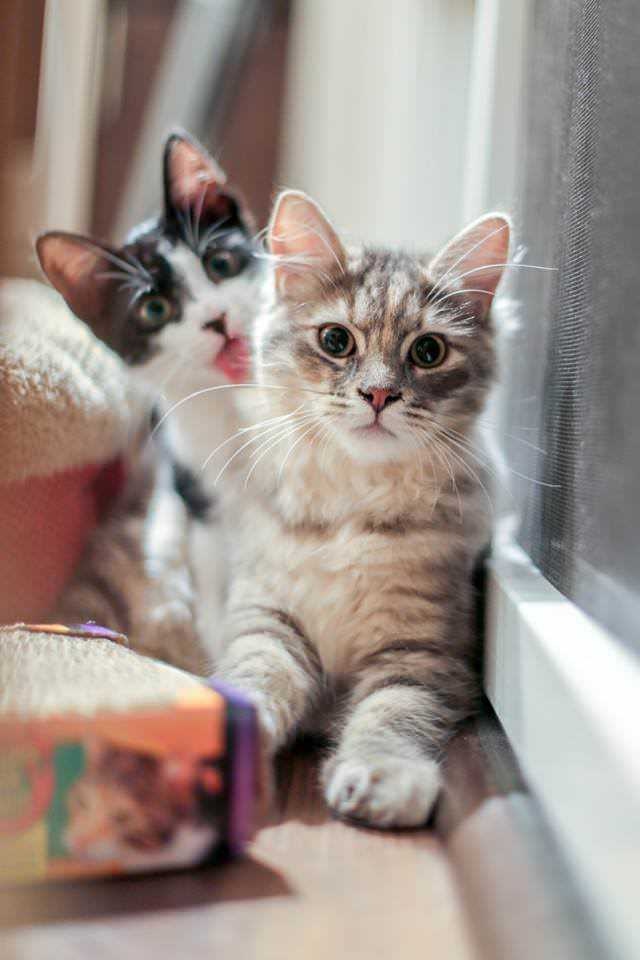 Cat Bleps 17