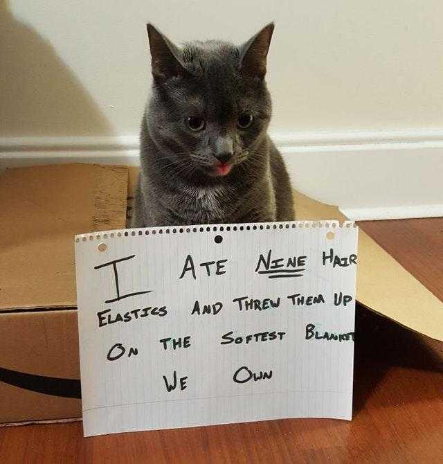 Cat Bleps 3