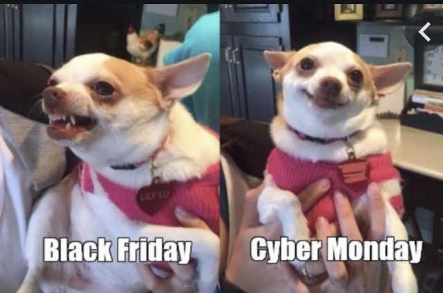 cyber monday animal meme - happy about deals