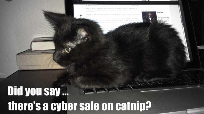 cyber monday animal meme - cat nip on sale!