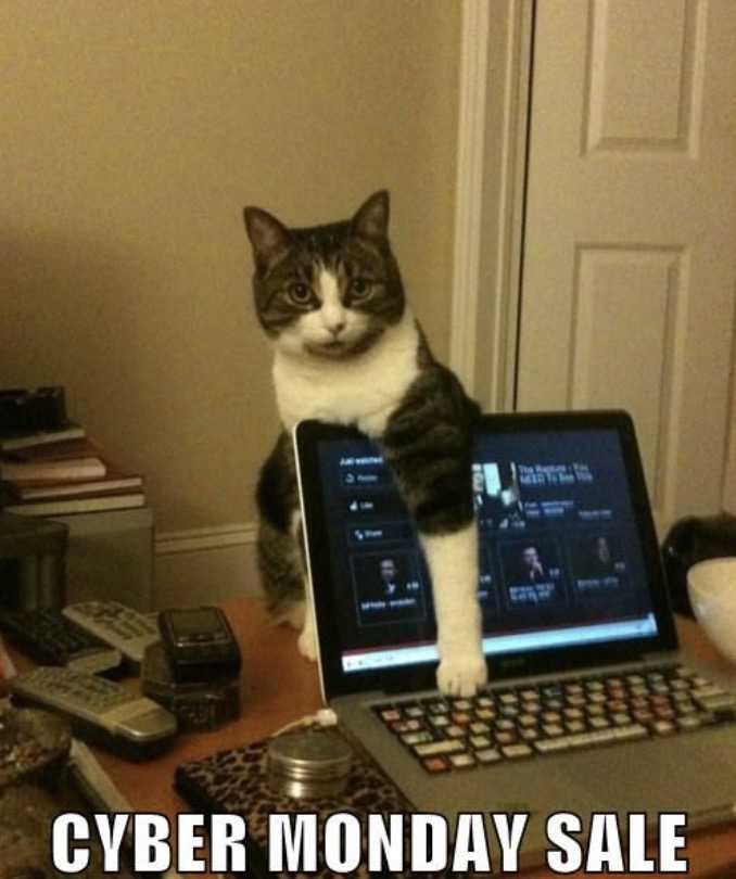 cyber monday animal memes - cat ad blocker